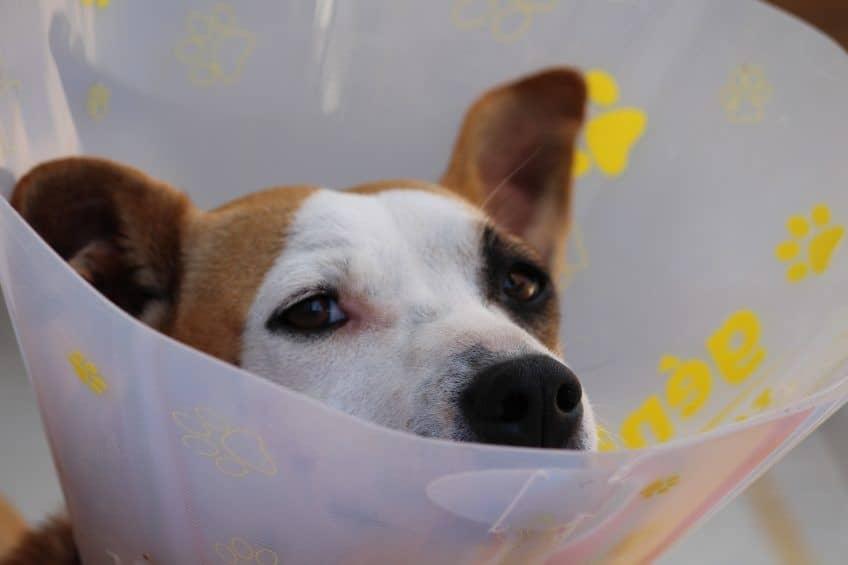 Pet Injury Bill Introduced In Florida Legislature